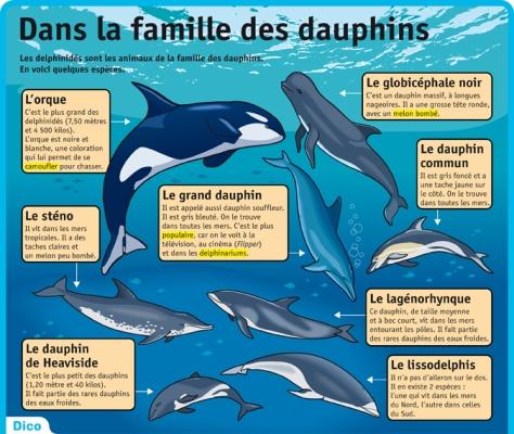 les familles de dauphins